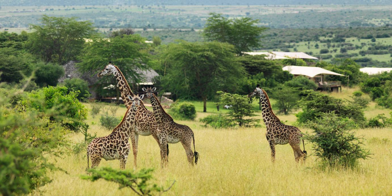 Discover-Africa-kenya safari4