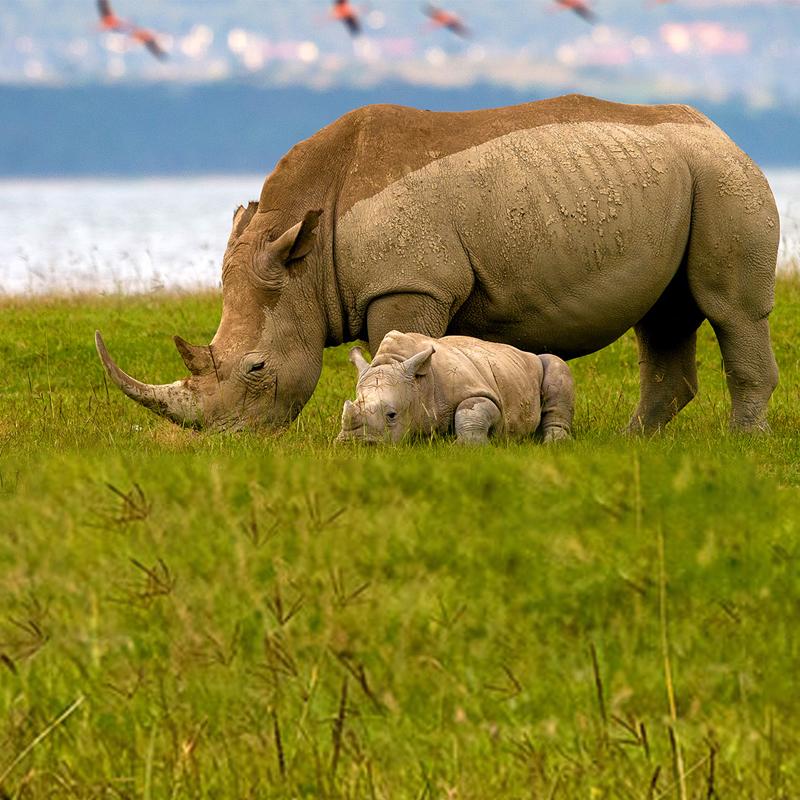 Discover-kenya safari