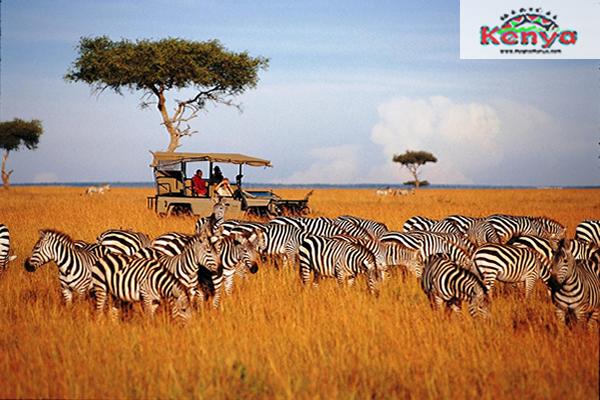 discover-kenya_safari