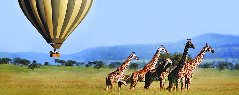 flying-safaris