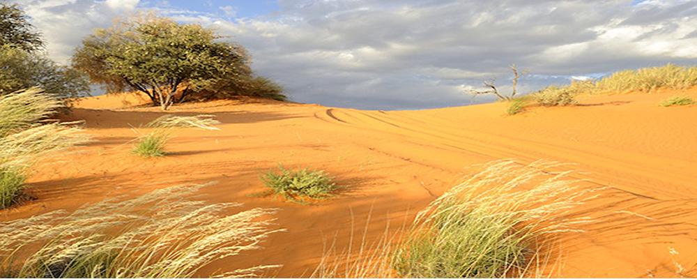 Kalahari 1
