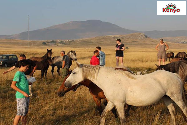 Wild-Horse-Safari-Tour