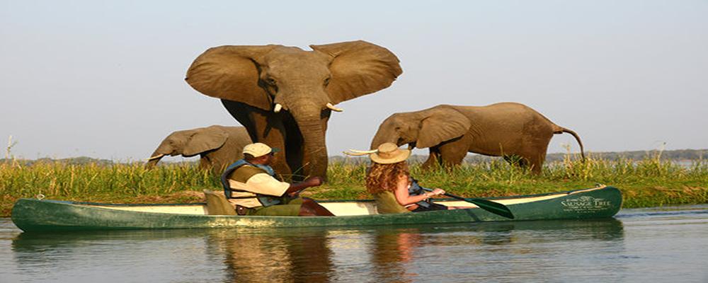 sausage-tree-camp-canoeing-elephants