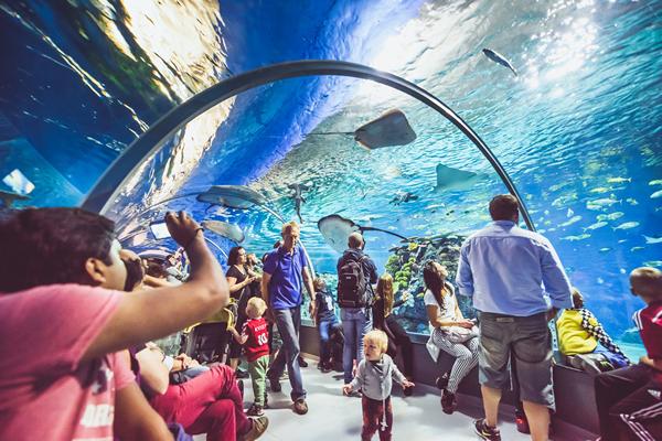 National Aquarium Denmark Copenhagen